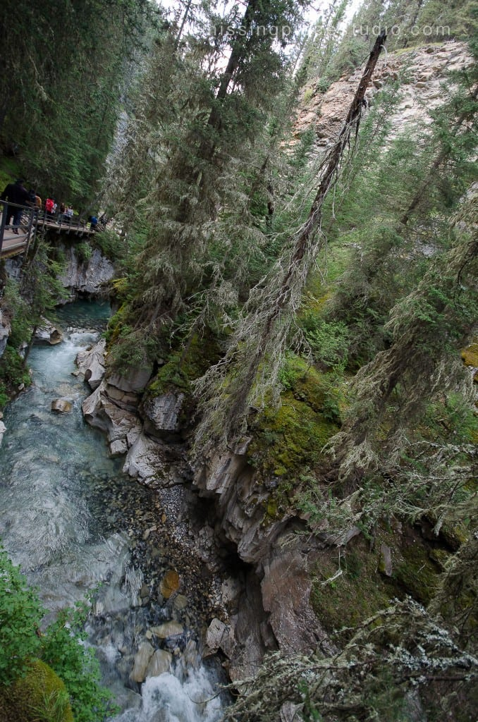 Johnston Canyon Creek-Banff Canada-Alberta014